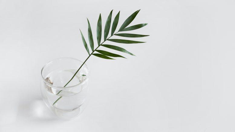 Les plantes d'intérieur : un accessoire déco